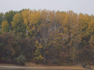 Parcul Nationa Balta Mica a Brailei (6)
