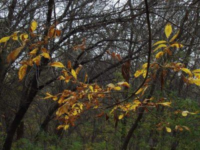 Parcul Nationa Balta Mica a Brailei (9)